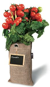 hangende tuin tomaat