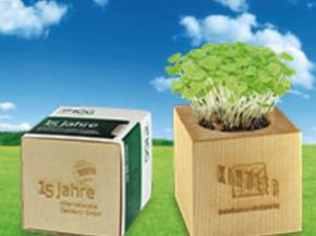Houten kubus met plant
